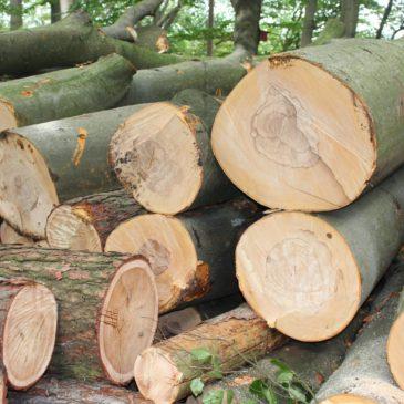 2020 Baumfällarbeiten am Schießstand